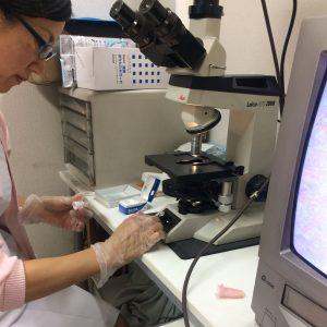 顕微鏡で看護師さんに診て頂きます。
